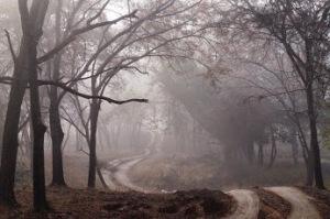 dirt-road-427913_1280