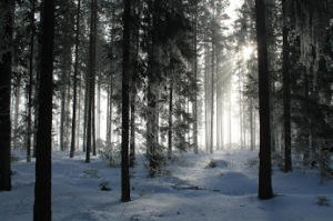 forest-287807_1280