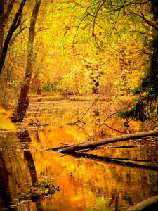 Golden Swamp